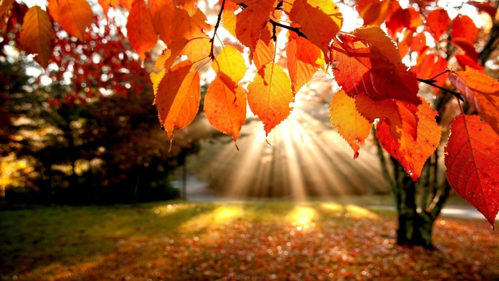 tumblr_static_trees-autumn-leaves-fall-sunlight-landscapes-nature